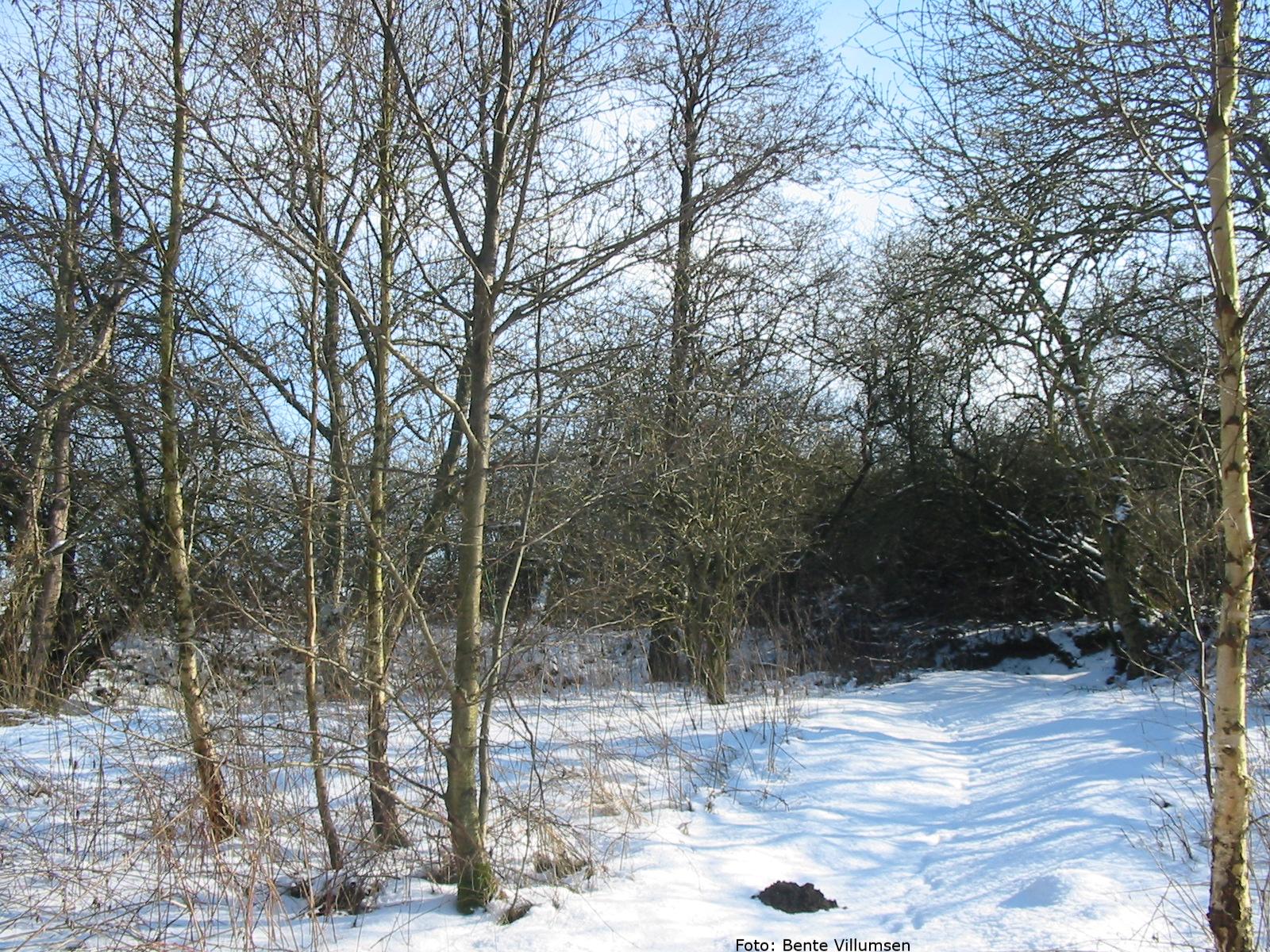 Vintermøde 2021 – 9. og 10. marts – on line møde over to dage